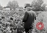 Image of Luther Burbank with cactus United States USA, 1919, second 6 stock footage video 65675025419