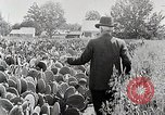 Image of Luther Burbank with cactus United States USA, 1919, second 7 stock footage video 65675025419