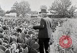 Image of Luther Burbank with cactus United States USA, 1919, second 8 stock footage video 65675025419