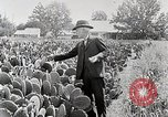 Image of Luther Burbank with cactus United States USA, 1919, second 9 stock footage video 65675025419