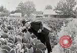 Image of Luther Burbank with cactus United States USA, 1919, second 10 stock footage video 65675025419