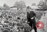 Image of Luther Burbank with cactus United States USA, 1919, second 12 stock footage video 65675025419