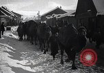 Image of Russian Army moving supplies by camel Russia, 1916, second 8 stock footage video 65675025520