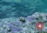 Image of early history Okinawa Ryukyu Islands, 1972, second 9 stock footage video 65675025521