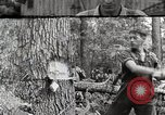 Image of logging and saw mill processing Crossville Tennessee USA, 1940, second 1 stock footage video 65675025572