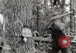 Image of logging and saw mill processing Crossville Tennessee USA, 1940, second 5 stock footage video 65675025572