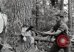Image of logging and saw mill processing Crossville Tennessee USA, 1940, second 7 stock footage video 65675025572