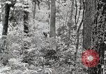 Image of logging and saw mill processing Crossville Tennessee USA, 1940, second 11 stock footage video 65675025572
