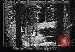 Image of Timber growing and logging California United States USA, 1931, second 2 stock footage video 65675025577