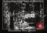 Image of Timber growing and logging California United States USA, 1931, second 3 stock footage video 65675025577