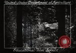 Image of Timber growing and logging California United States USA, 1931, second 10 stock footage video 65675025577