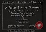 Image of Timber growing and logging California United States USA, 1931, second 12 stock footage video 65675025577