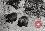 Image of Wildlife and nature and its destruction United States USA, 1925, second 8 stock footage video 65675025583