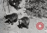 Image of Wildlife and nature and its destruction United States USA, 1925, second 10 stock footage video 65675025583