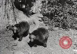 Image of Wildlife and nature and its destruction United States USA, 1925, second 11 stock footage video 65675025583