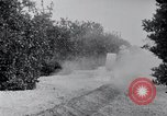 Image of Orange grove irrigation California United States USA, 1920, second 10 stock footage video 65675025651