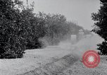Image of Orange grove irrigation California United States USA, 1920, second 12 stock footage video 65675025651