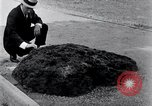 Image of Meteorite excavated in Dallas Dallas Texas USA, 1920, second 6 stock footage video 65675025654