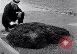 Image of Meteorite excavated in Dallas Dallas Texas USA, 1920, second 7 stock footage video 65675025654