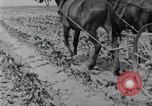 Image of Horse drawn cultivator United States USA, 1920, second 2 stock footage video 65675025657
