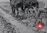 Image of Horse drawn cultivator United States USA, 1920, second 3 stock footage video 65675025657