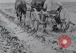 Image of Horse drawn cultivator United States USA, 1920, second 4 stock footage video 65675025657