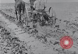 Image of Horse drawn cultivator United States USA, 1920, second 5 stock footage video 65675025657