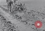 Image of Horse drawn cultivator United States USA, 1920, second 6 stock footage video 65675025657