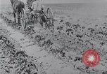 Image of Horse drawn cultivator United States USA, 1920, second 7 stock footage video 65675025657