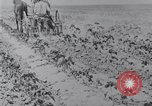 Image of Horse drawn cultivator United States USA, 1920, second 8 stock footage video 65675025657