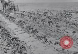 Image of Horse drawn cultivator United States USA, 1920, second 12 stock footage video 65675025657