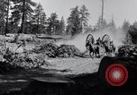 Image of large wheeled rig hauling cut logs United States USA, 1920, second 3 stock footage video 65675025658