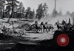 Image of large wheeled rig hauling cut logs United States USA, 1920, second 5 stock footage video 65675025658