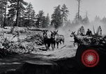 Image of large wheeled rig hauling cut logs United States USA, 1920, second 6 stock footage video 65675025658