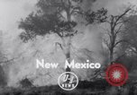 Image of forest fire New Mexico United States USA, 1951, second 2 stock footage video 65675025743