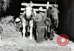 Image of farm life Michigan United States USA, 1941, second 9 stock footage video 65675025816