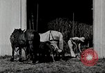 Image of farm life Michigan United States USA, 1941, second 8 stock footage video 65675025820