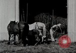 Image of farm life Michigan United States USA, 1941, second 10 stock footage video 65675025820