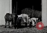 Image of farm life Michigan United States USA, 1941, second 11 stock footage video 65675025820