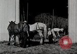 Image of farm life Michigan United States USA, 1941, second 12 stock footage video 65675025820