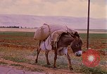 Image of scenes of a road Israel, 1968, second 8 stock footage video 65675025901