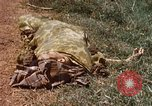 Image of Booby trapped Viet Cong remains Vietnam, 1967, second 12 stock footage video 65675025979