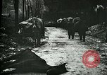 Image of Aftermath of the battle of Caporetto in World War I Italy, 1917, second 12 stock footage video 65675026036