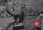 Image of Ringling Brothers circus New York United States USA, 1967, second 5 stock footage video 65675026451