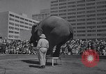 Image of Ringling Brothers circus New York United States USA, 1967, second 11 stock footage video 65675026451