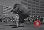 Image of Ringling Brothers circus New York United States USA, 1967, second 12 stock footage video 65675026451