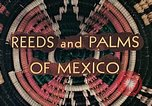 Image of reed and palm Mexico, 1941, second 9 stock footage video 65675026499