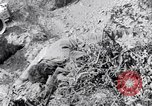 Image of Korean War atrocity Korea, 1952, second 7 stock footage video 65675026521