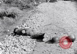 Image of Korean War atrocity Korea, 1952, second 10 stock footage video 65675026521
