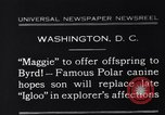 Image of polar canine bitch Washington DC USA, 1931, second 1 stock footage video 65675026602